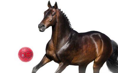 Key Visual Pferdesport Blogfoto