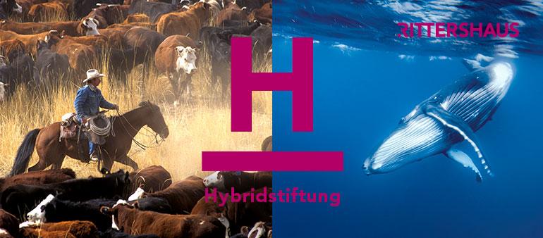 RIT-Blog-Hybridstiftung-770x338-1